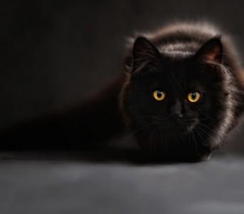 Pisica și ziua de 13